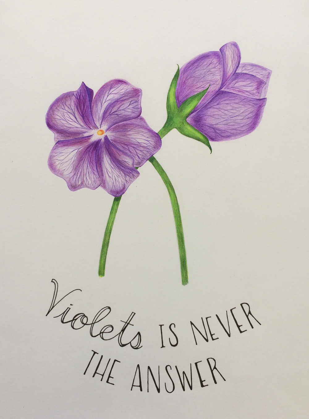 Violets Is Never The Answer