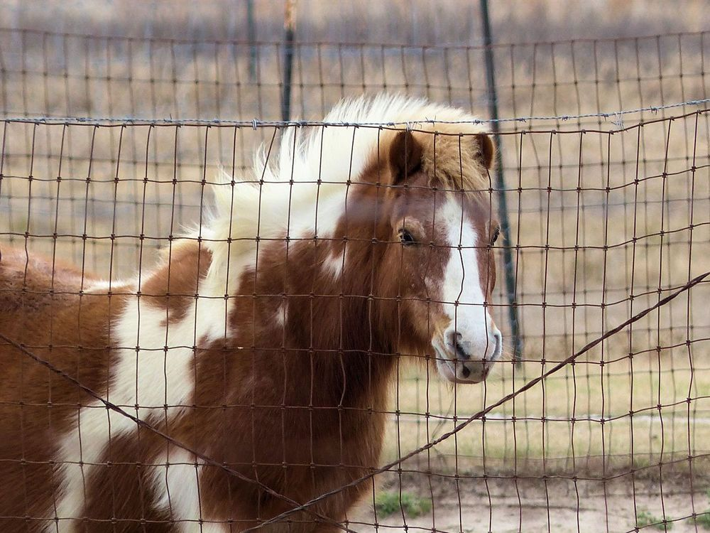 Miniature Horse Farm