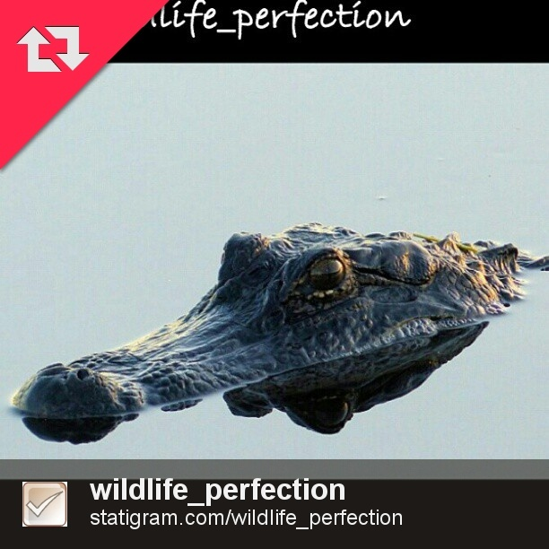 Awesome Alligator won a Daily Feature