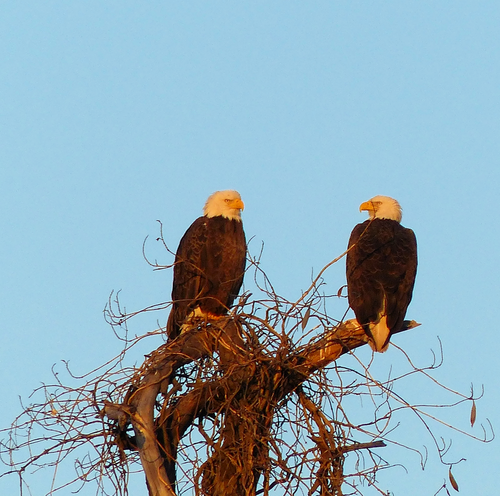 First close up view of the Eagles