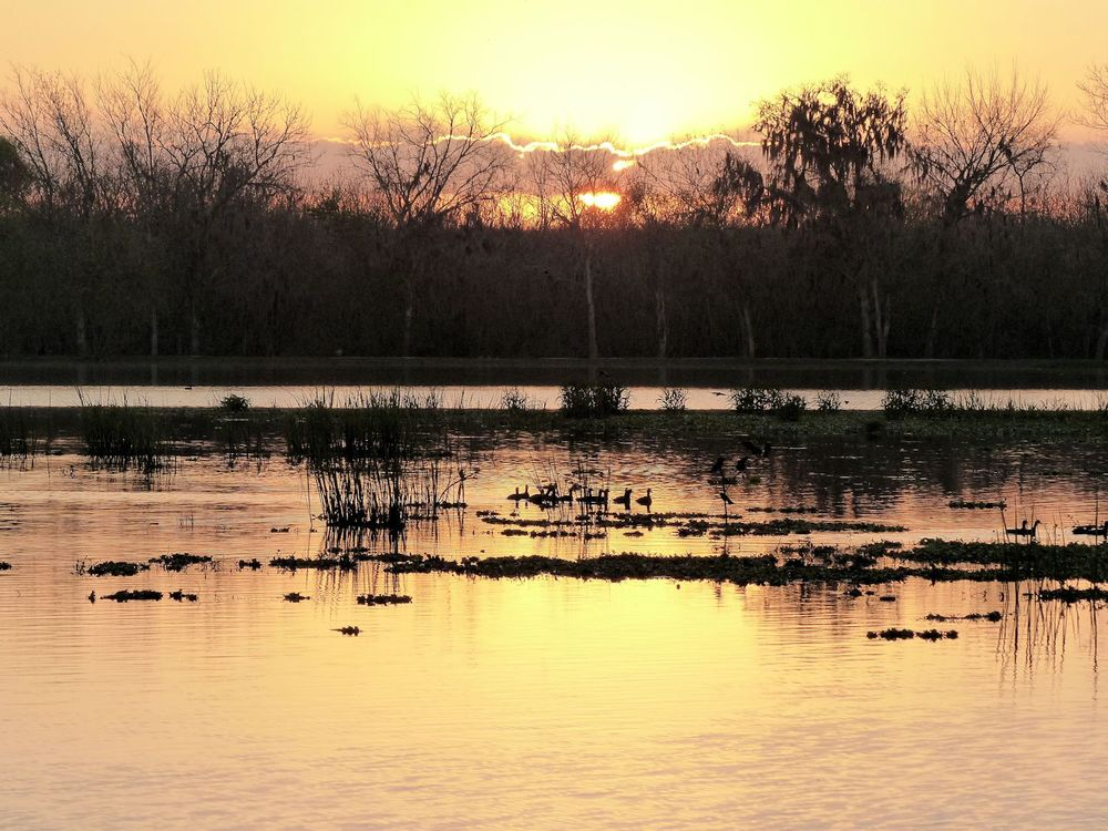 Sunrise at 40-acre Lake, Brazos Bend