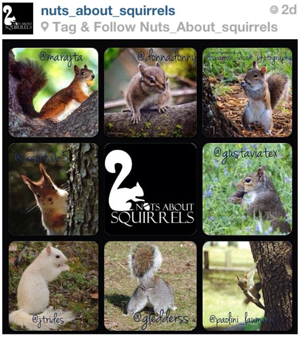 Nuts about Squirrels feature