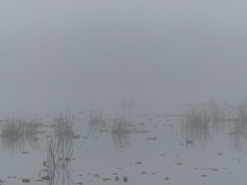 Foggy 40-Acre Lake, Brazos Bend State Park