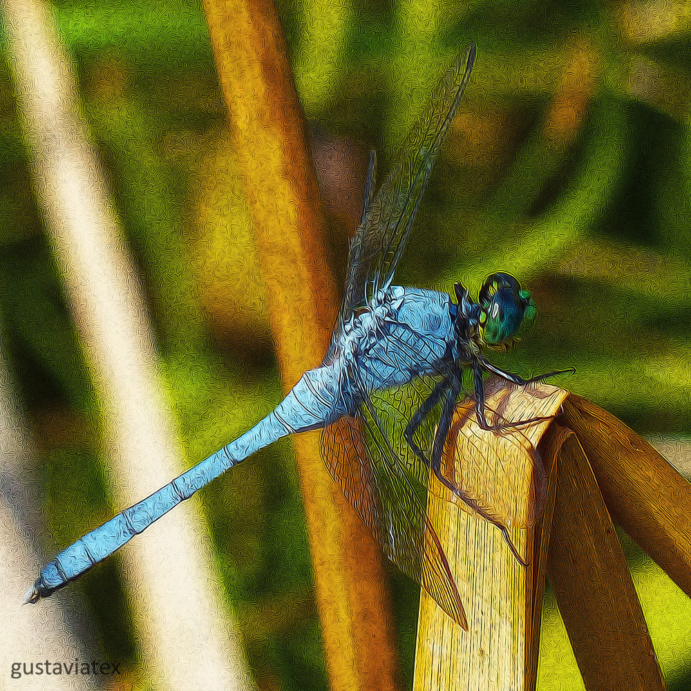 Male Eastern Pondhawk, edited with Fractalius and Oil Paint
