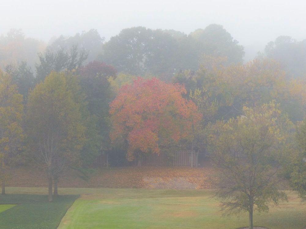 Foggy autumn view