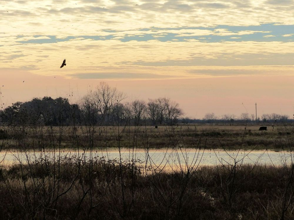 Winter morning on the Katy Prairie