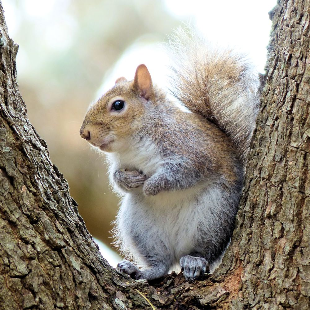 Instagram Award-winning squirrel