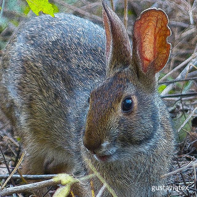 Brazos Bend Bunny