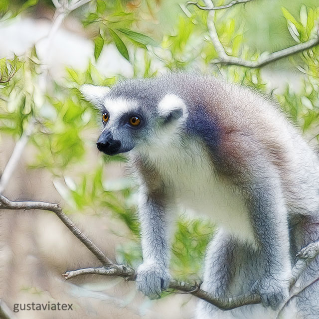 Larry the Lemur