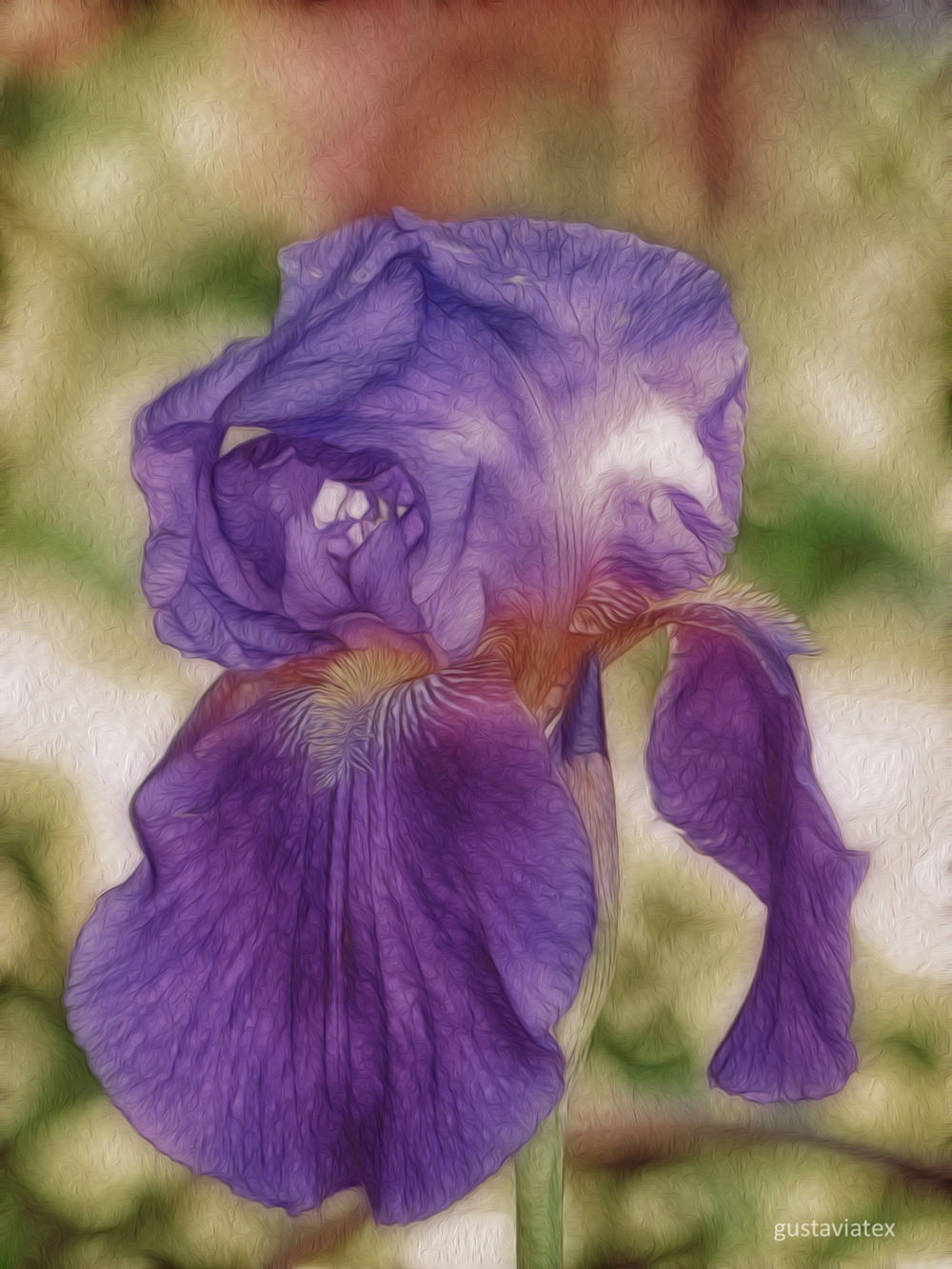 Purple Palestine Iris