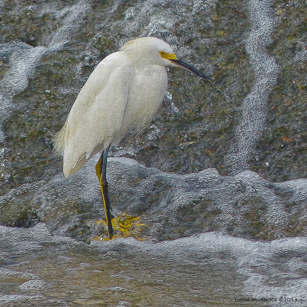 Snowy Egret at Buffalo Bayou