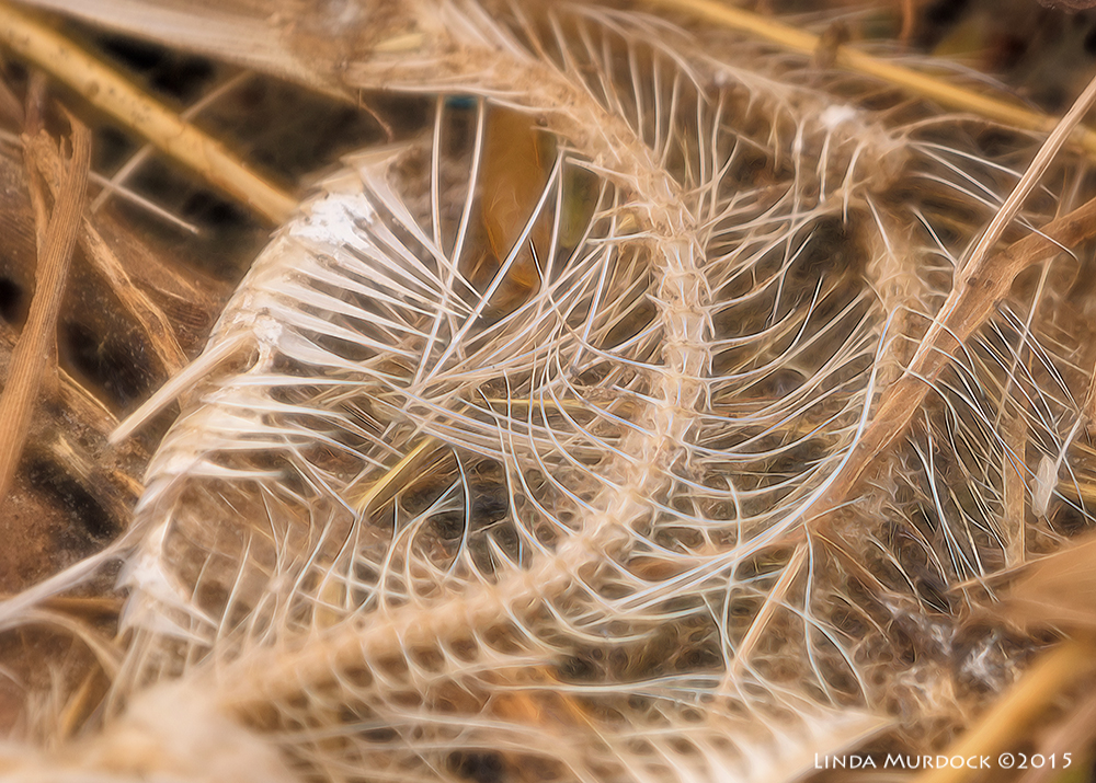 Swirls and curves    Sony A77II with Sony 70-400 G2  f/6.3  1/1600 sec ISO 640
