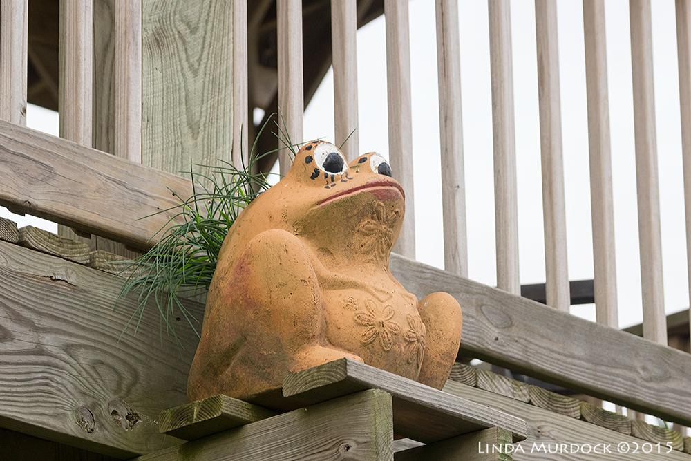 Fierce frog