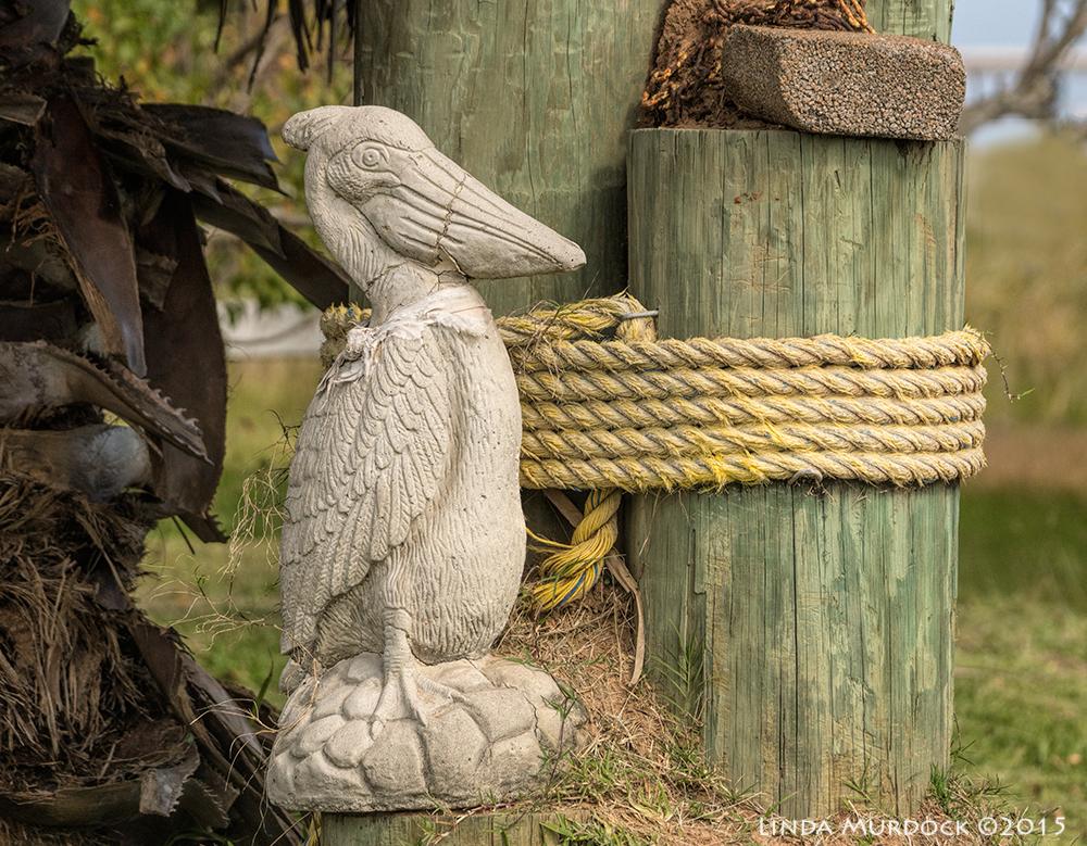 Pelican sentinel