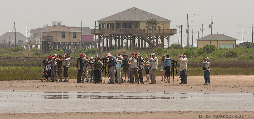 Birders brought by tour guides to Rollover Pass - Spring Migration 2014