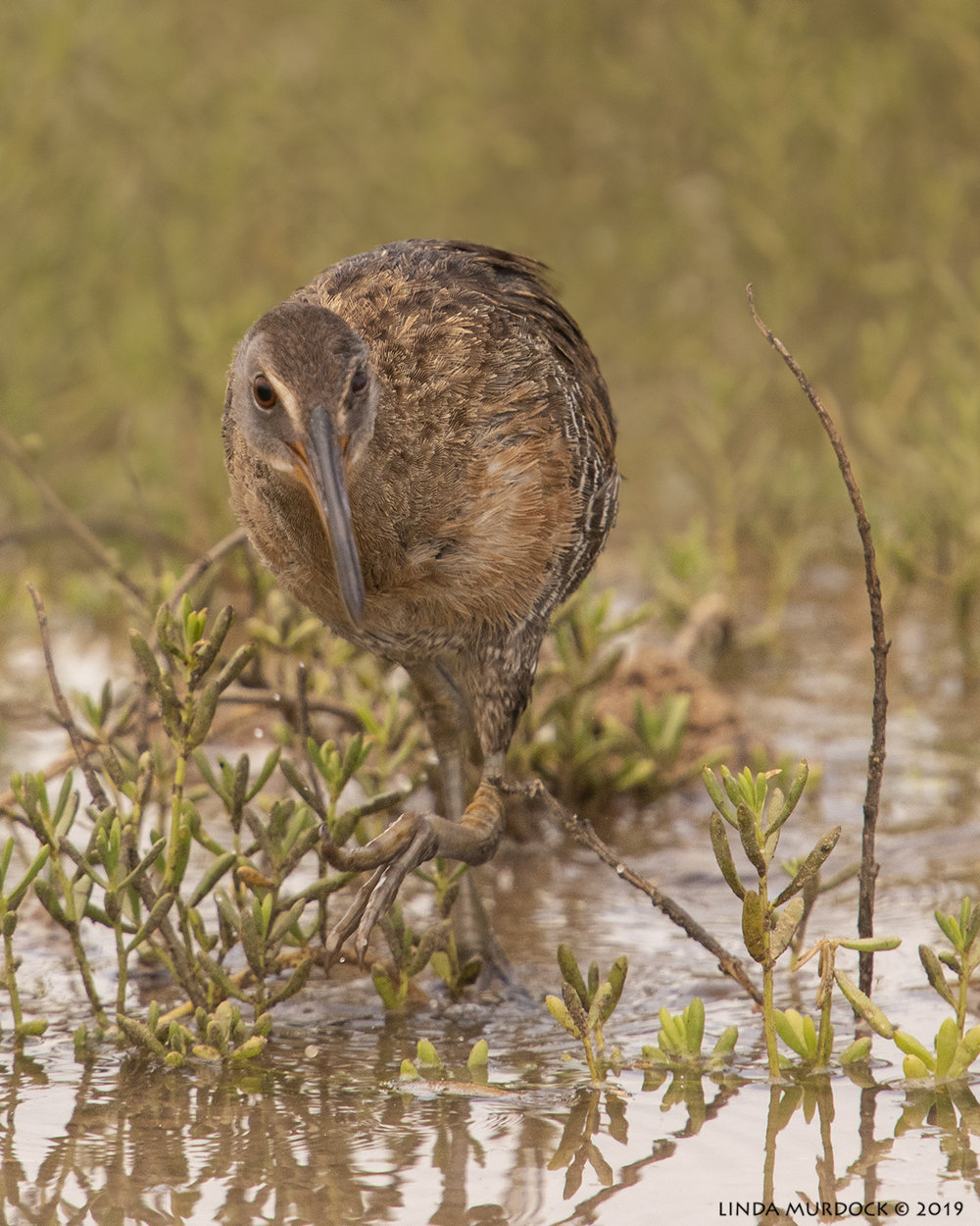 Clapper Rail with Layer mask and gradient