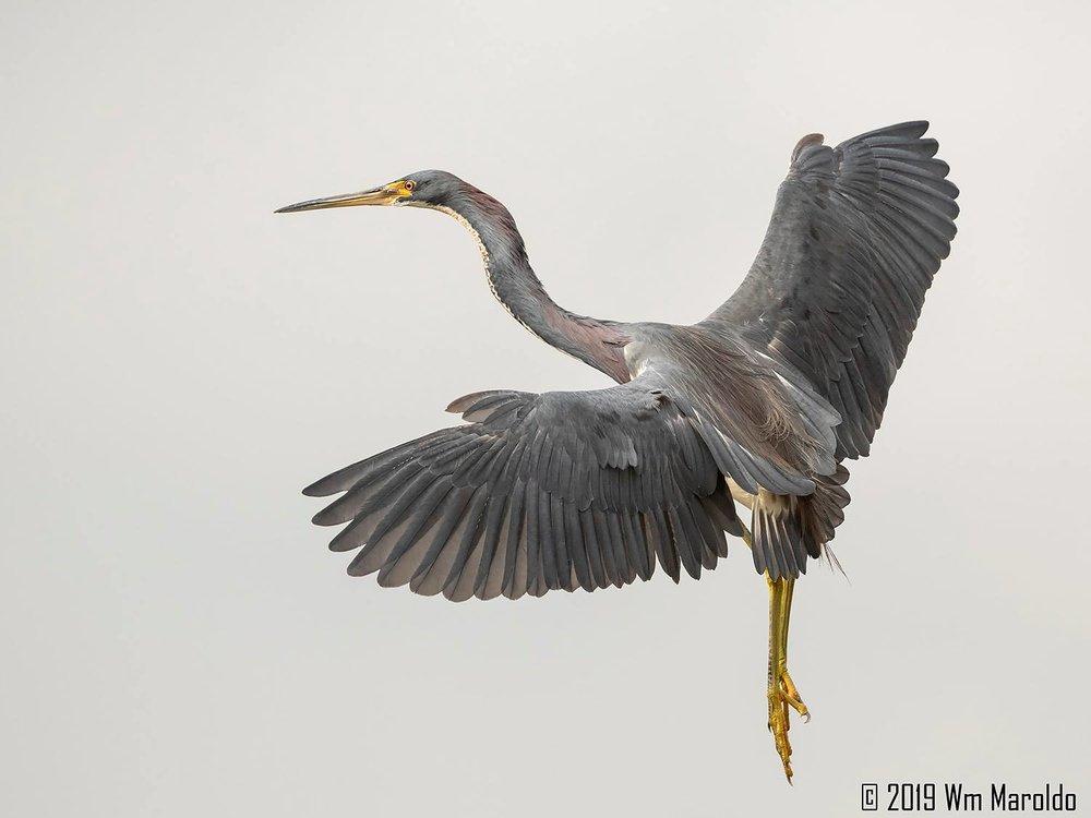 Bird in flight…  Nikon D850 with Nikkor 500 f/5.6 PF VR ~ 1/2500 sec f/6.3 ISO 800