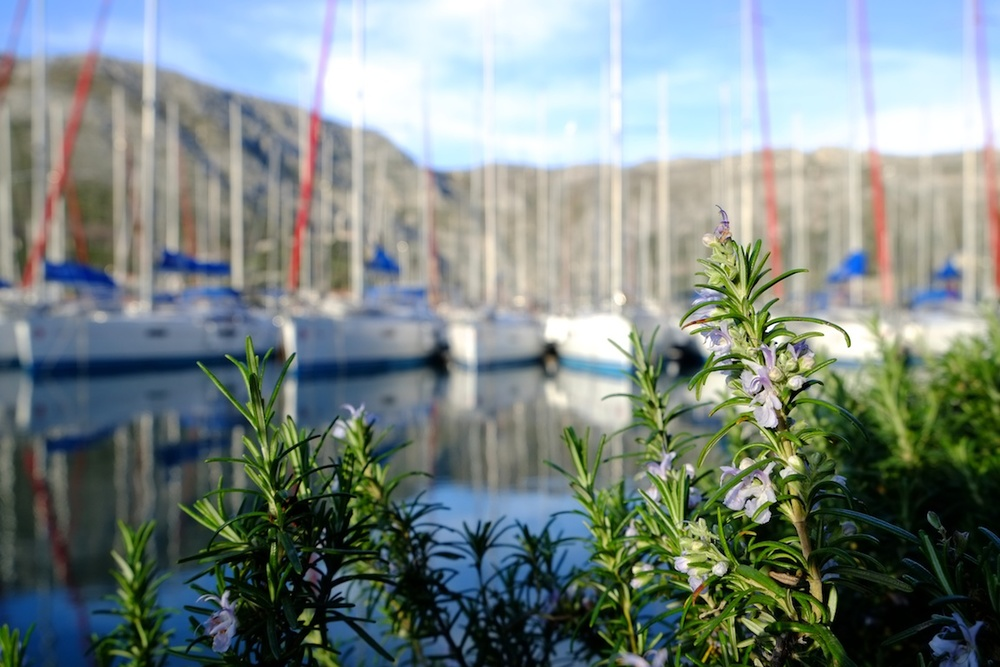 Herbs & Yachts