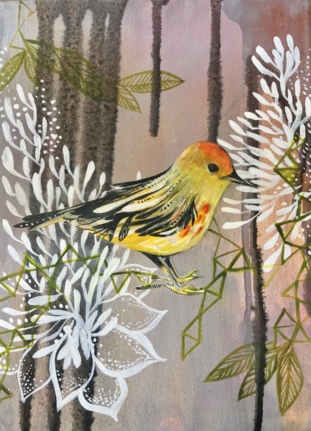 One of three birdies from commission, called the yellow mangrove from Galapagos Island.