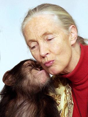Jane Goodall.jpg