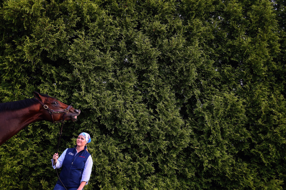 Divining Rod grazes after training one day prior to the 140th Preakness Stakes at Pimlico Race Course on May 15, 2015 in Baltimore, Maryland.