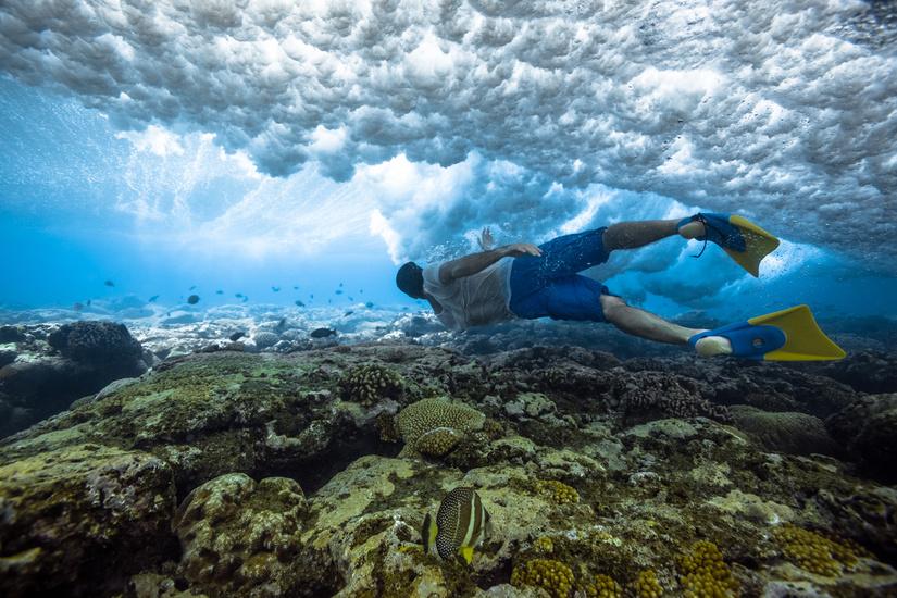 underwater-by-mark-tipple-the-tree-mag-50.jpg
