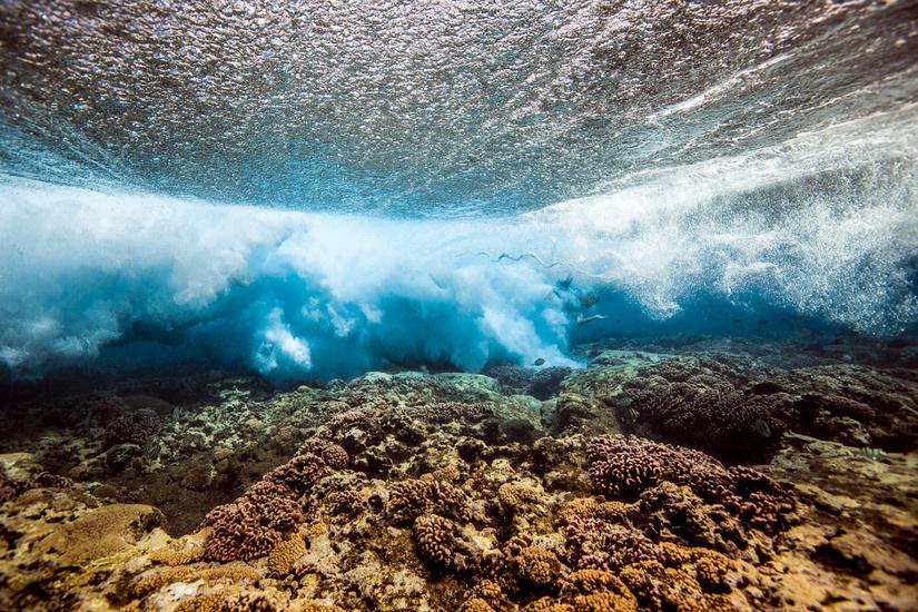 underwater-by-mark-tipple-the-tree-mag-51.jpg