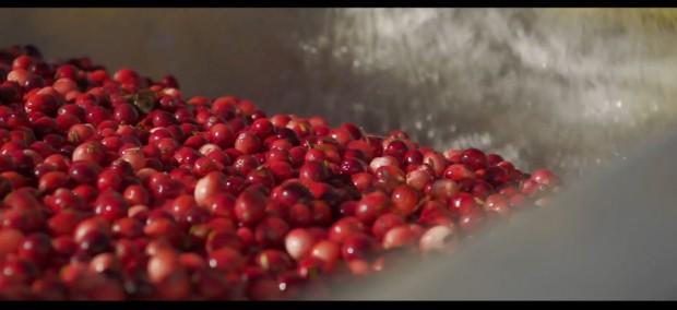 the_tree_mag-cranberries-by-alex-horner-30.jpg