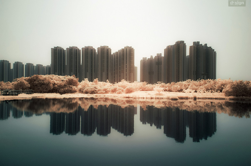 the_tree_mag-photographs-by-yiu-yu-hoi-30.jpg