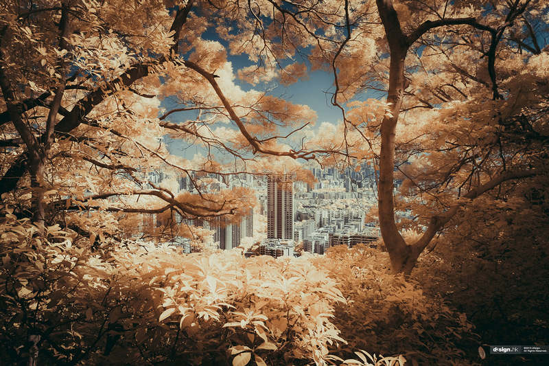 the_tree_mag-photographs-by-yiu-yu-hoi-90.jpg