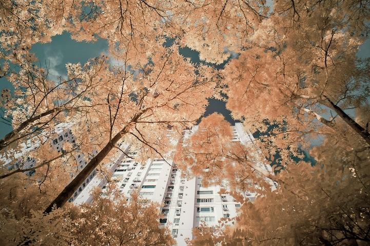 the_tree_mag-photographs-by-yiu-yu-hoi-170.jpg