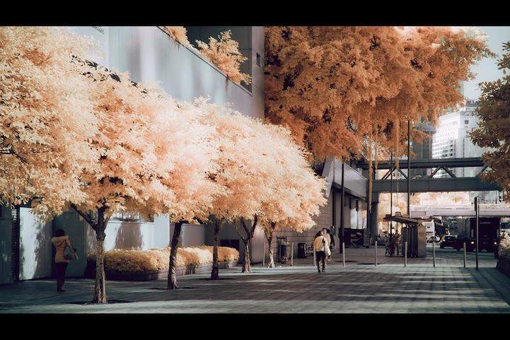 the_tree_mag-photographs-by-yiu-yu-hoi-200.jpg