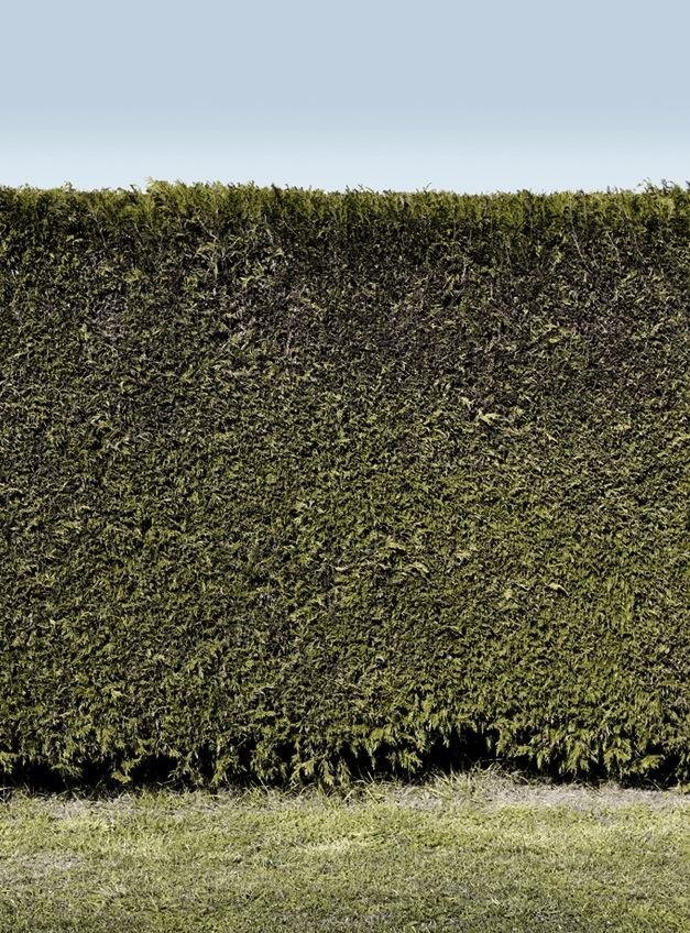 the_tree_mag-works-by-eddy-de-azevedo-220.jpg