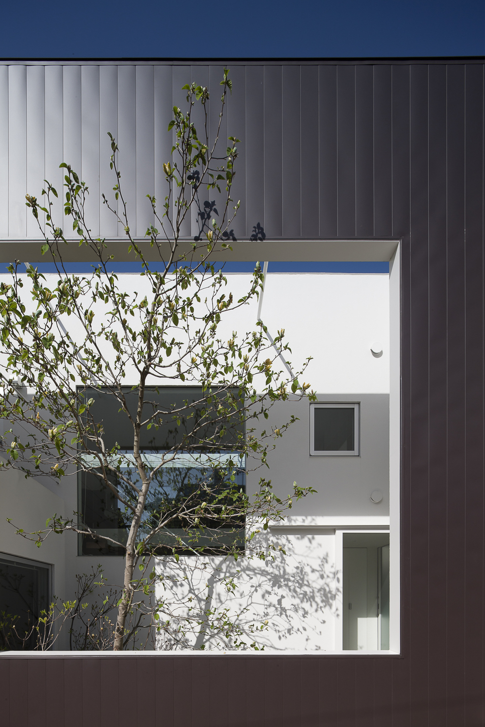 the-tree-mag-frame-by-uid-architects-20.jpg