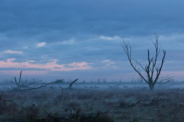 the-tree-mag-winter-by-paul-klaver-90.JPG