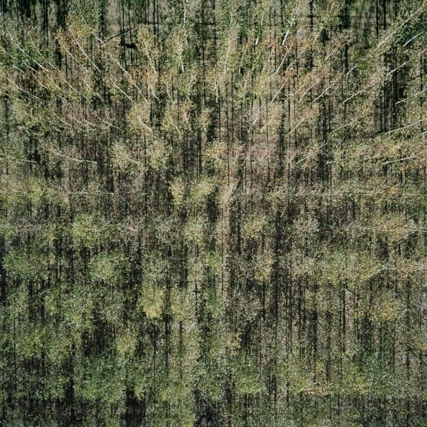 the-tree-mag-baumschule-by-gerco-de-ruijter-20.jpg