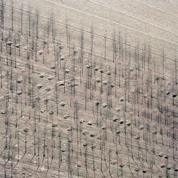 the-tree-mag-baumschule-by-gerco-de-ruijter-40.jpg