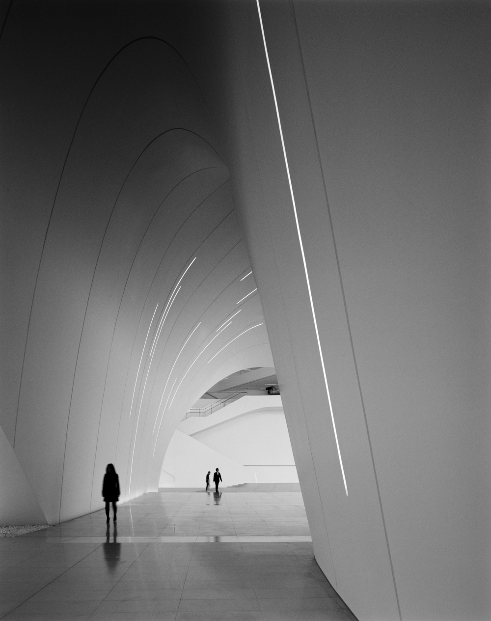 the tree mag Heydar Aliyev Center by Zaha Hadid Architects 230.jpg