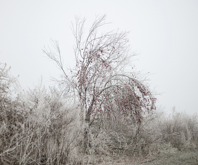 the tree mag here-anywhere-by-tamas-dezso-100.jpg