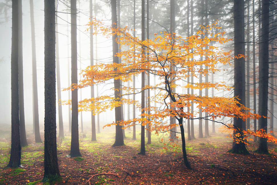 the-tree-mag-woodland-by-kilian-schnberger-50.jpg