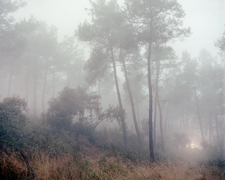 the-tree-mag-Peter Zeglis-30.jpg