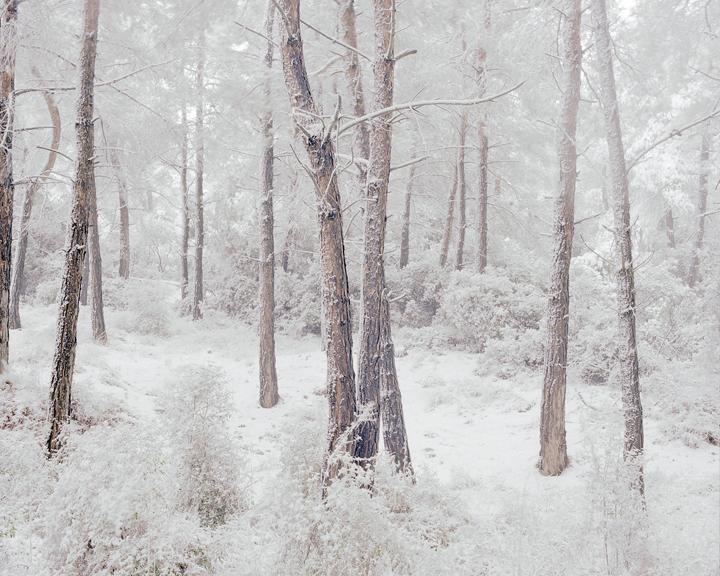 the-tree-mag-Peter Zeglis-100.jpg
