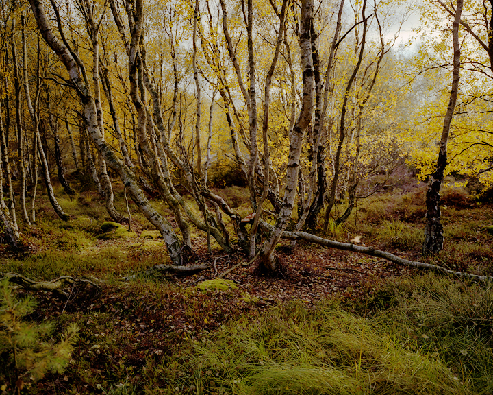 the-tree-mag-Peter Zeglis-120.jpg
