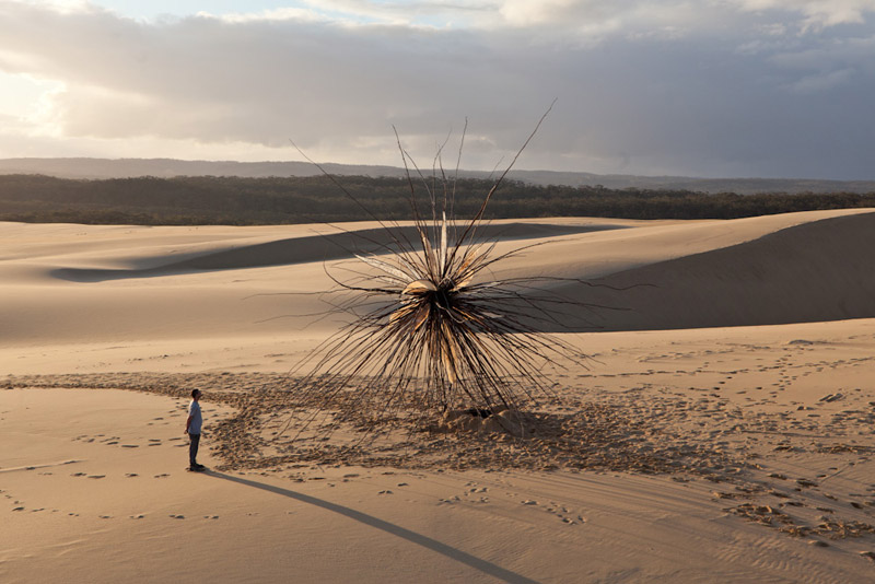 the-tree-mag_spinifex-by-corey-thomas_20.jpg