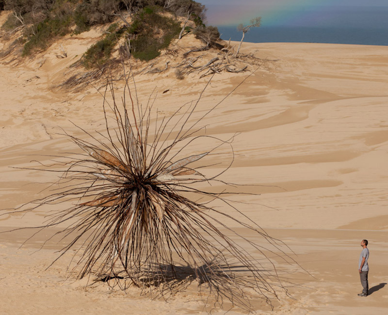 the-tree-mag_spinifex-by-corey-thomas_40.jpg