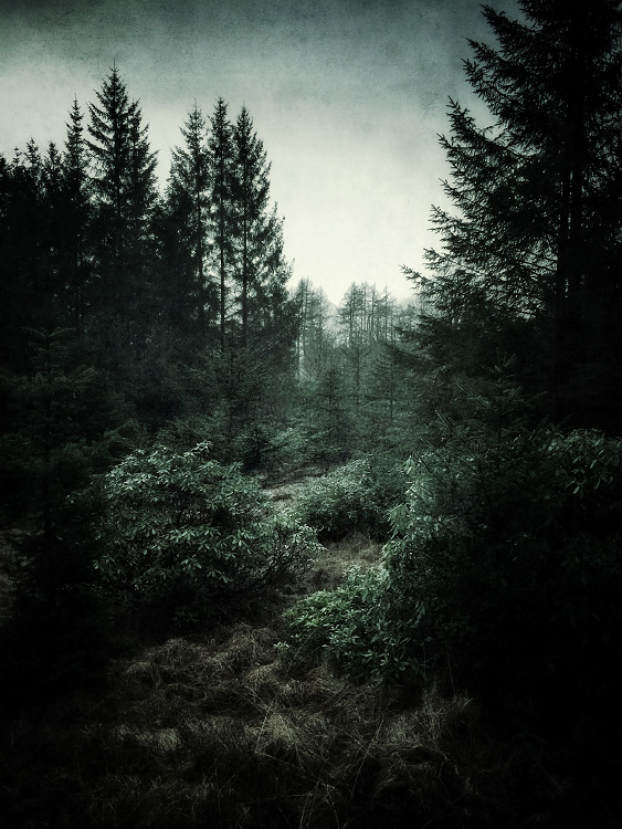 the-tree-mag_iphoneonly-Etive-by-Julian-Calverley_70.jpg