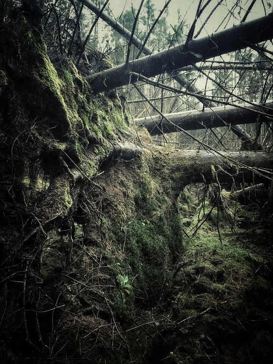 the-tree-mag_iphoneonly-Etive-by-Julian-Calverley_90.jpg