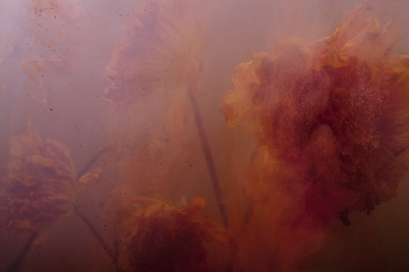 the-tree-mag_stamen-by-nicholas-alan-cope-dustin-edward-arnold_90.jpg