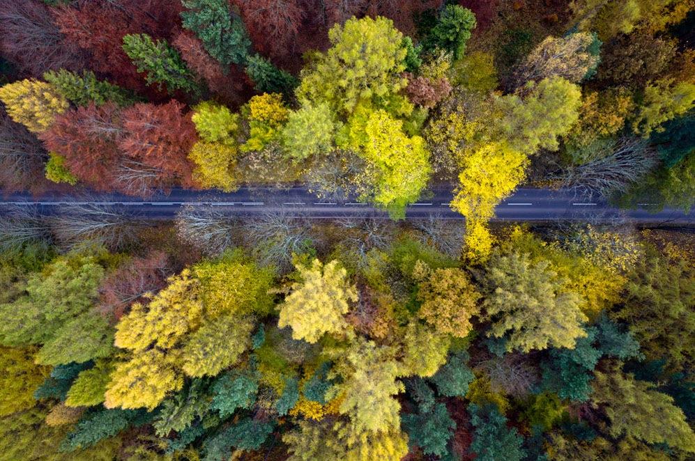 the-tree-mag_kacperkowalski-com_autumn_06.jpg