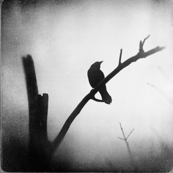 the-tree-mag_zewar-fadhil_70.jpg